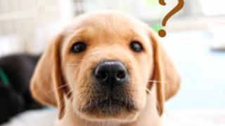物忘れな犬のイメージ画像
