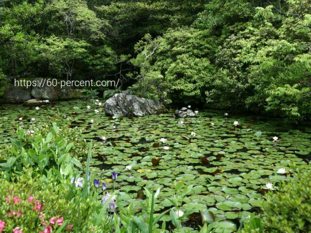 南禅寺の塔頭 金地院の池の画像