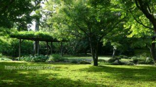 城南宮の平安の庭の苔庭の画像