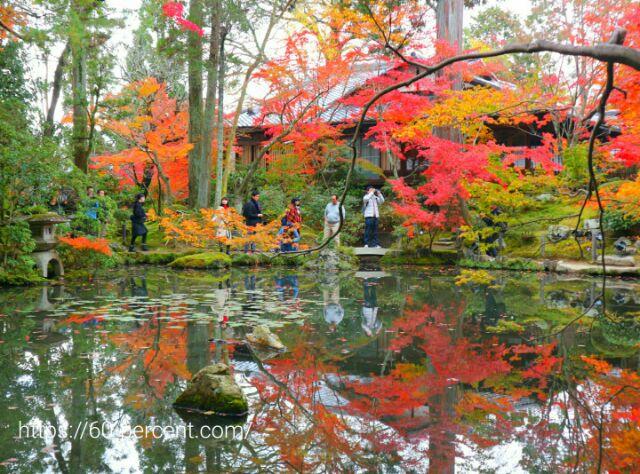 天授庵の池と庭園の画像