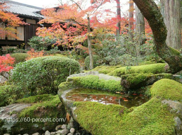 天授庵の庭園と苔と蹲の画像