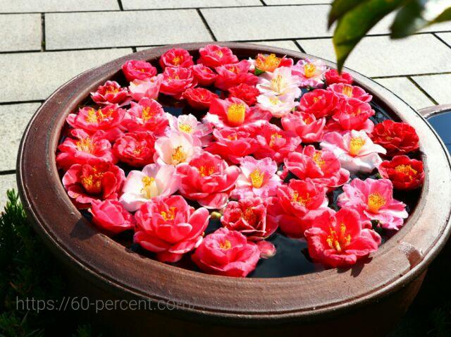 霊鑑寺のお花の画像