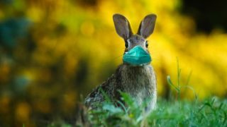 マスクをしてるウサギの画像