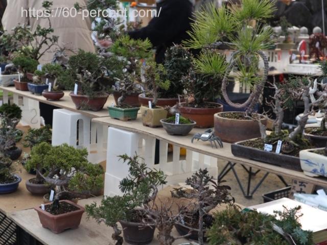 四天王寺骨董市の盆栽の画像
