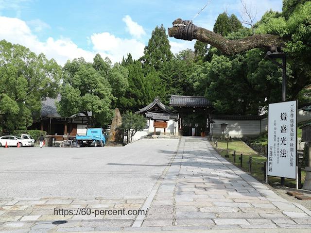青蓮院門跡の門と楠の画像