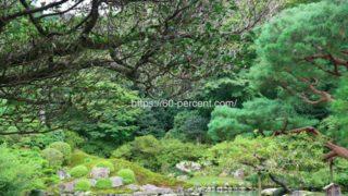 青蓮院門跡の祖阿弥の庭の画像