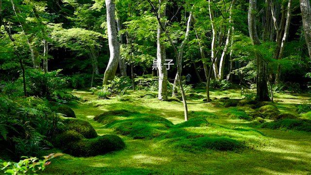 祇王寺の苔庭の画像