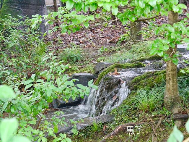 旧三井家下鴨別邸の小川の画像
