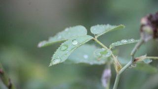 雨の日のイメージ画像