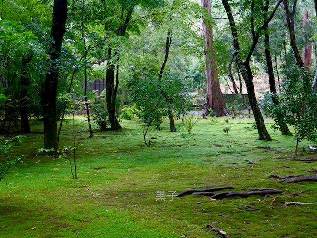 地蔵院(竹の寺)の苔庭の画像