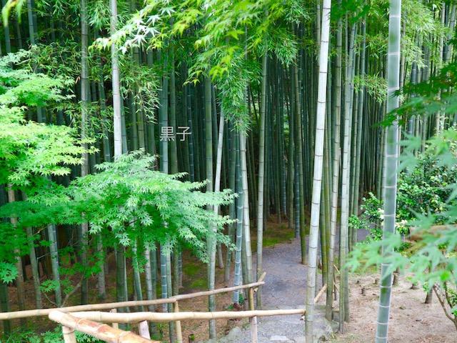 圓光寺の回遊式庭園の竹林の画像