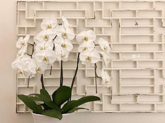 2ヶ月目の胡蝶蘭の画像