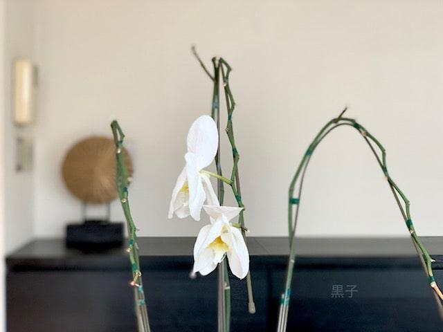 4ヶ月経った胡蝶蘭の画像