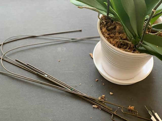 支柱を抜いた胡蝶蘭の画像